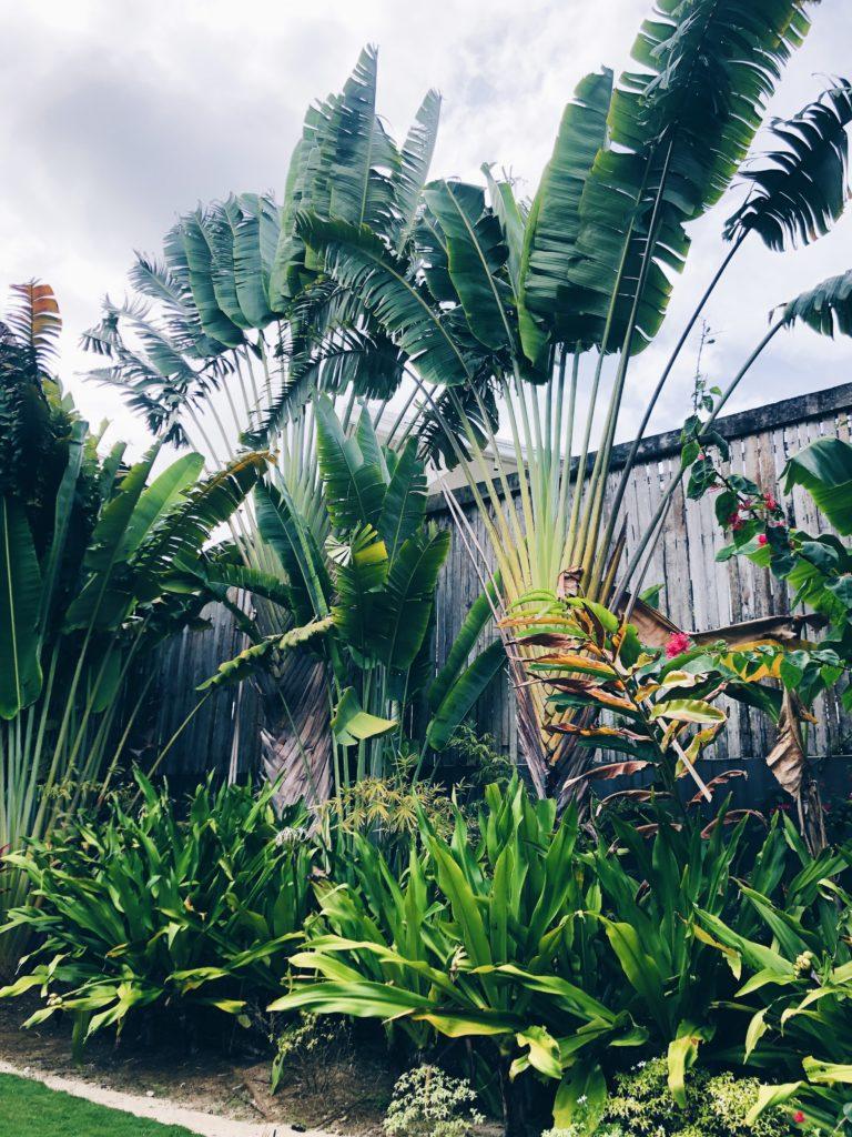 Green plants Isla Cabana Siargao