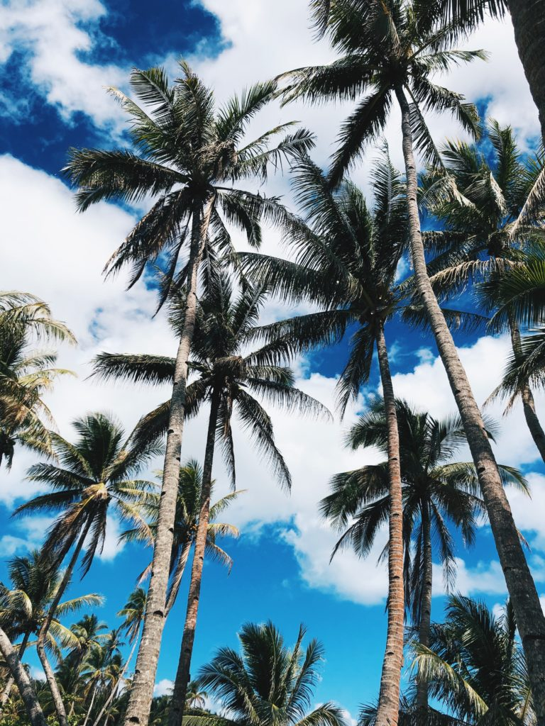 palm trees siargao